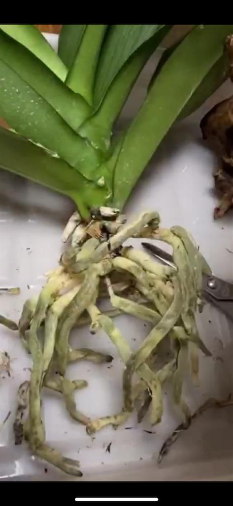 f:id:pitcherplant:20200818121130p:image