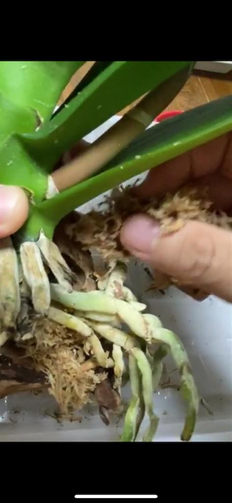 f:id:pitcherplant:20200818234736p:image