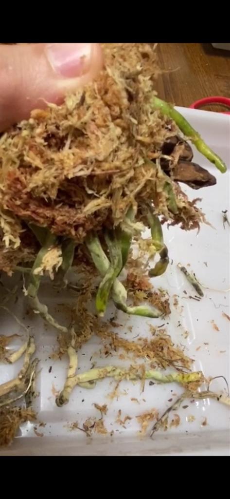 f:id:pitcherplant:20200818234818p:image