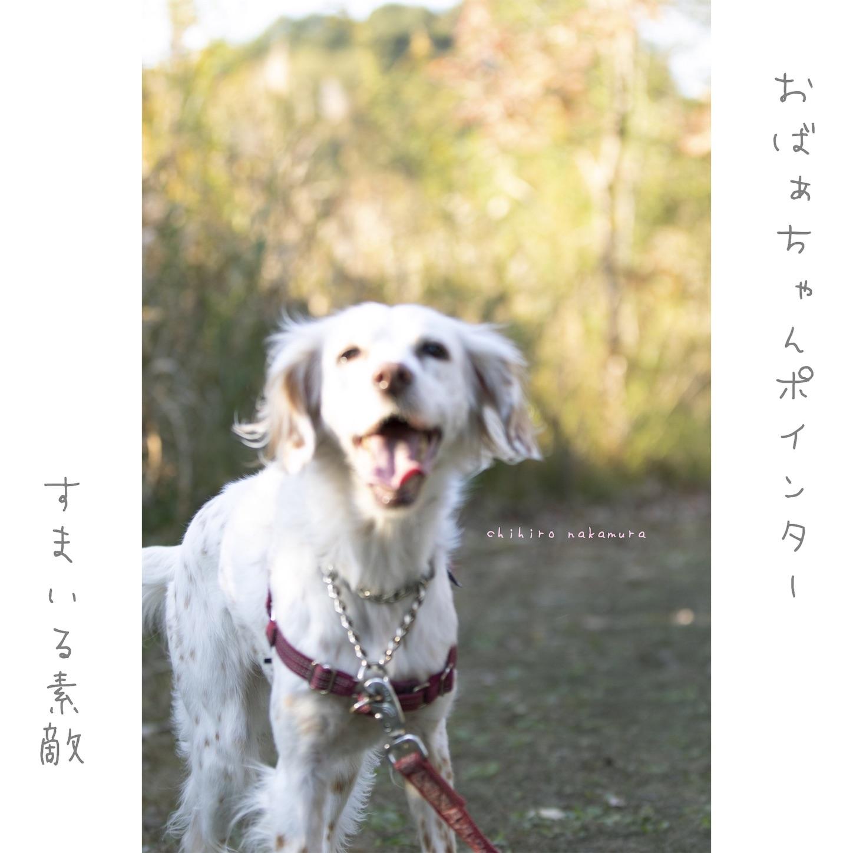 f:id:piyo3chihiro:20201124000801j:image