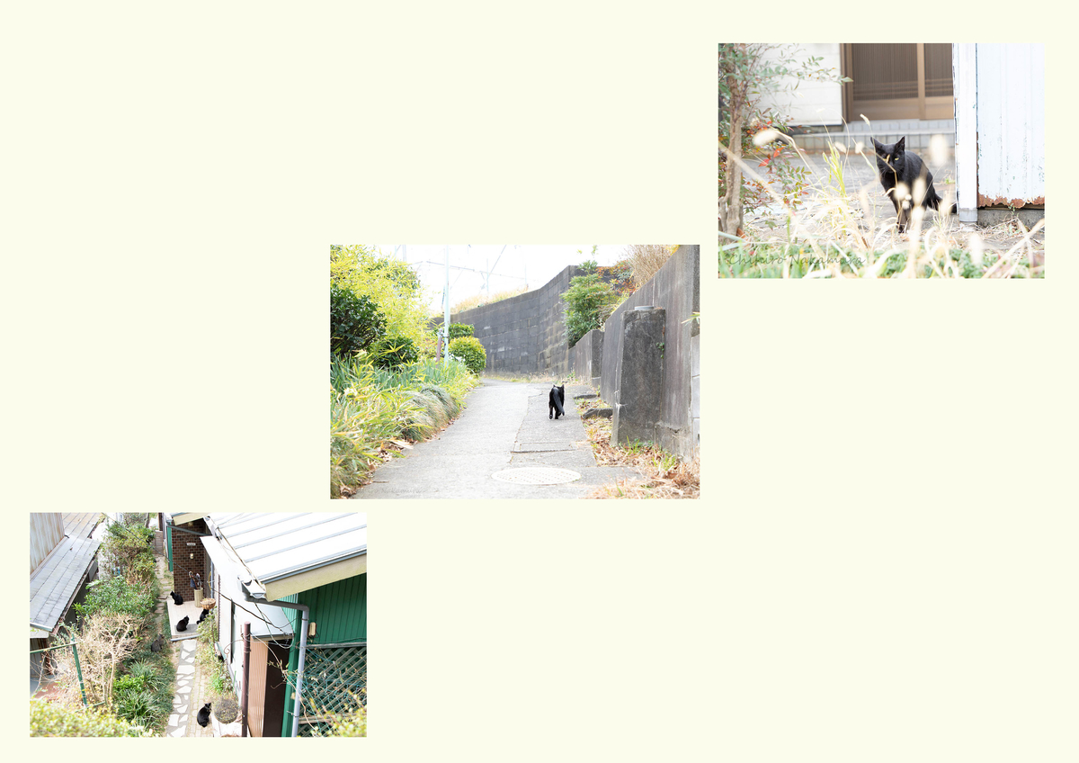 f:id:piyo3chihiro:20210130203030j:plain