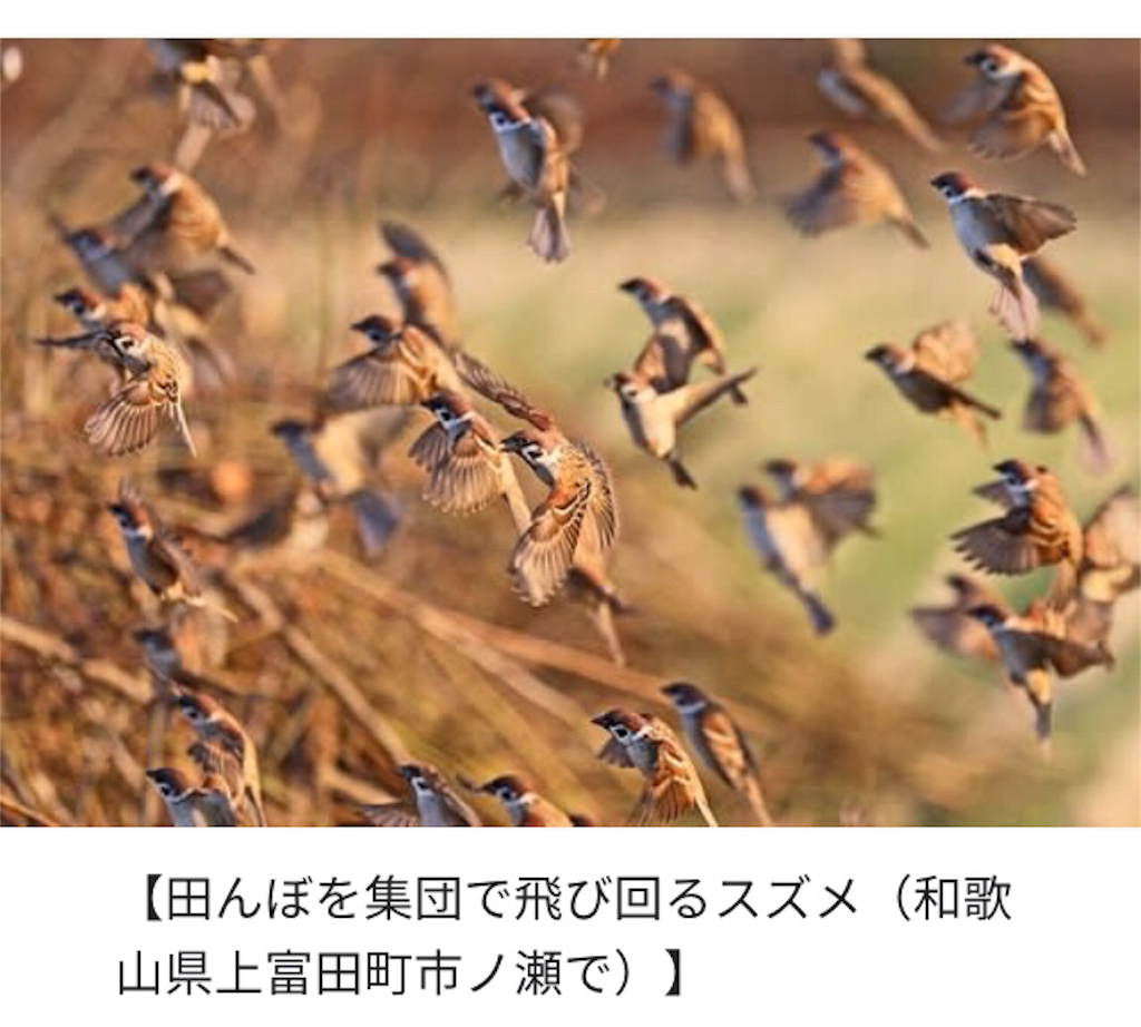 f:id:piyosuketochocotoume:20190102102108p:image