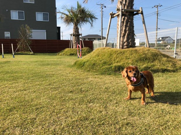 夏,犬,散歩