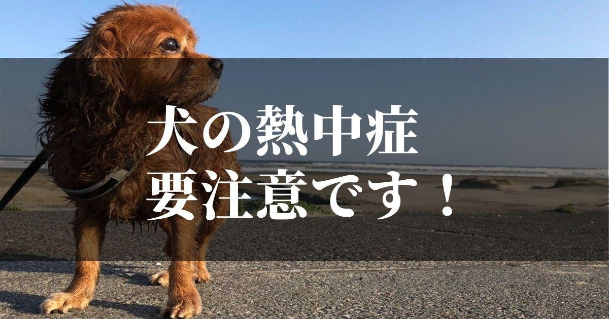 犬の熱中症の対処法と初期症状は?!【死んだら絶対後悔します】