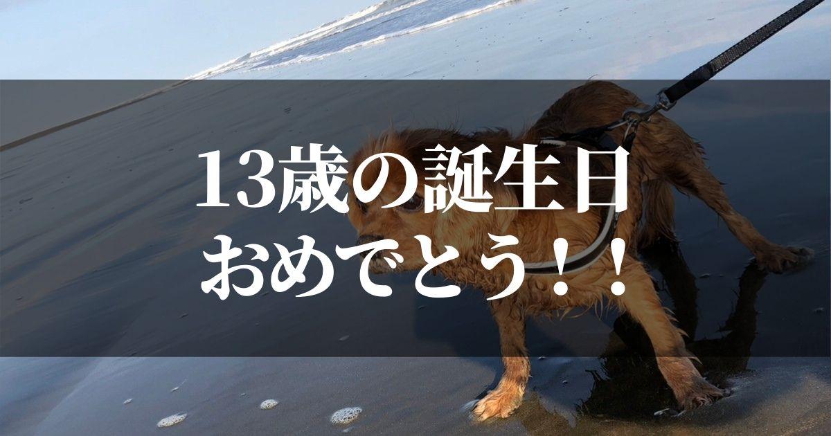 コジロウ13歳おめでとう!そしてありがとう!!【シニア犬の闘病生活は続きます】