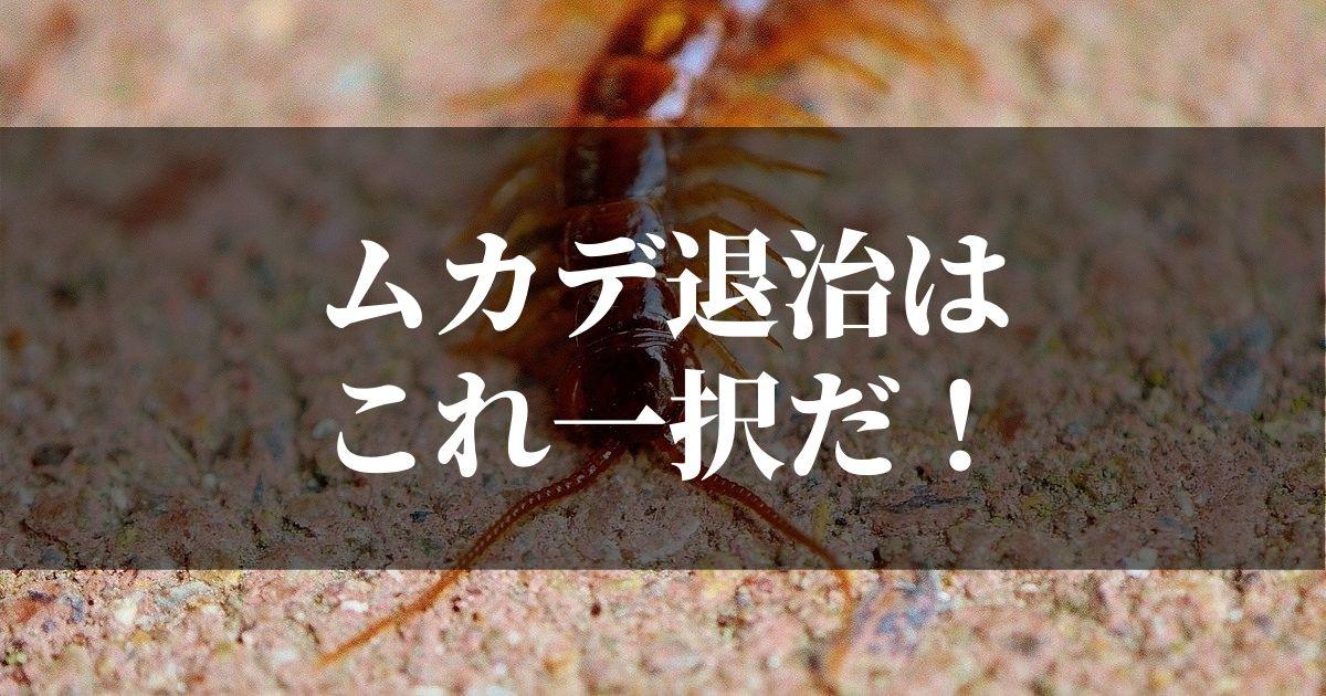 ムカデ退治のおすすめな方法と殺虫剤はコレだ!!【簡単一撃】