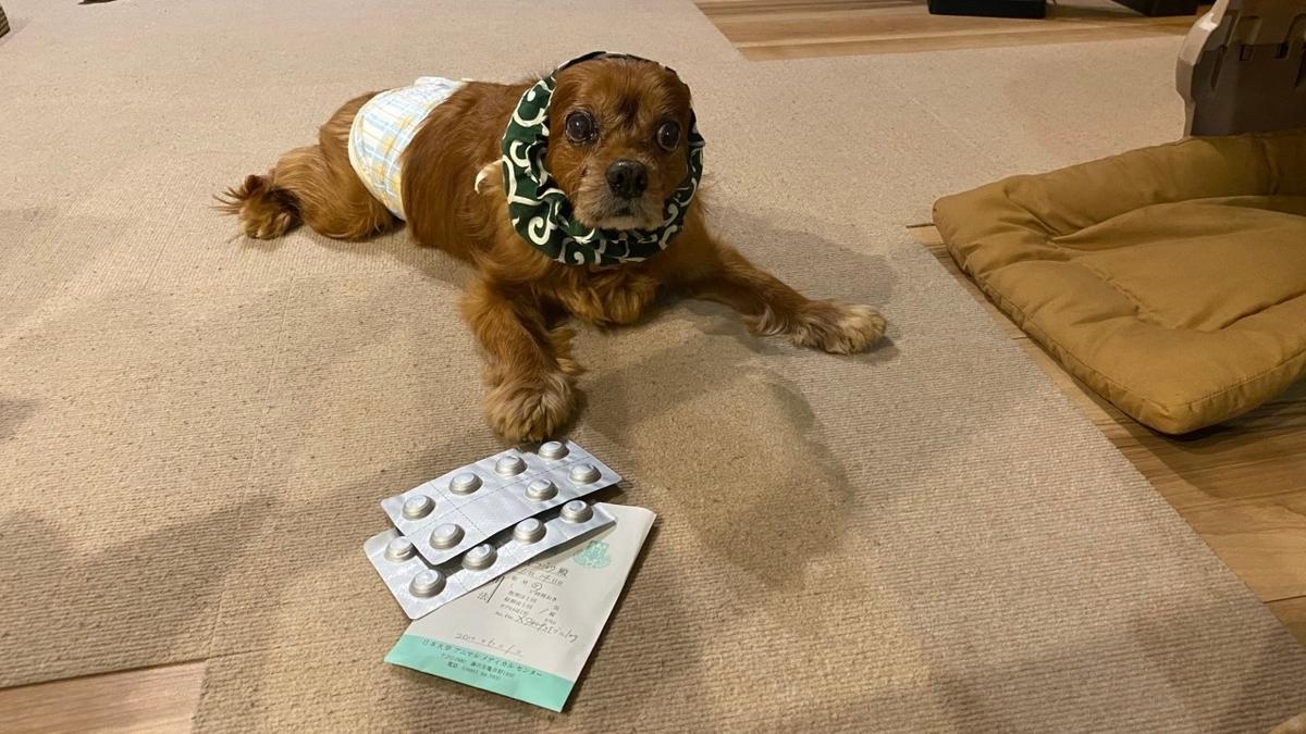 犬の膀胱腫瘍、良性を願う。負けるなコジロウ。