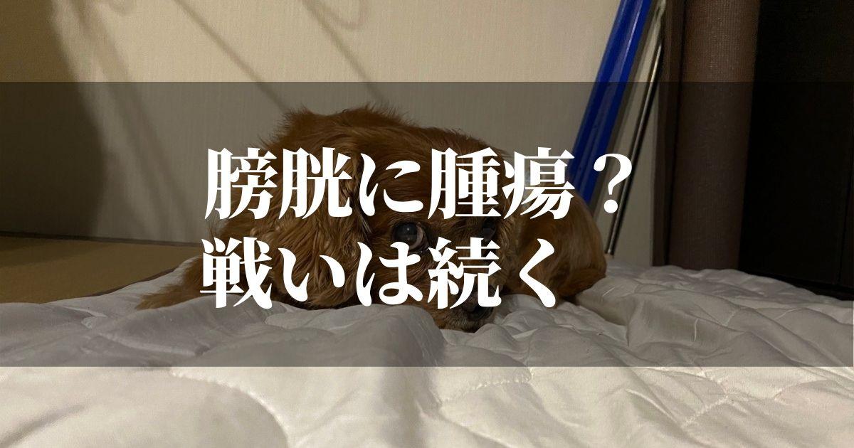 犬の膀胱腫瘍の検査で・・・【愛犬コジロウ頑張ります】
