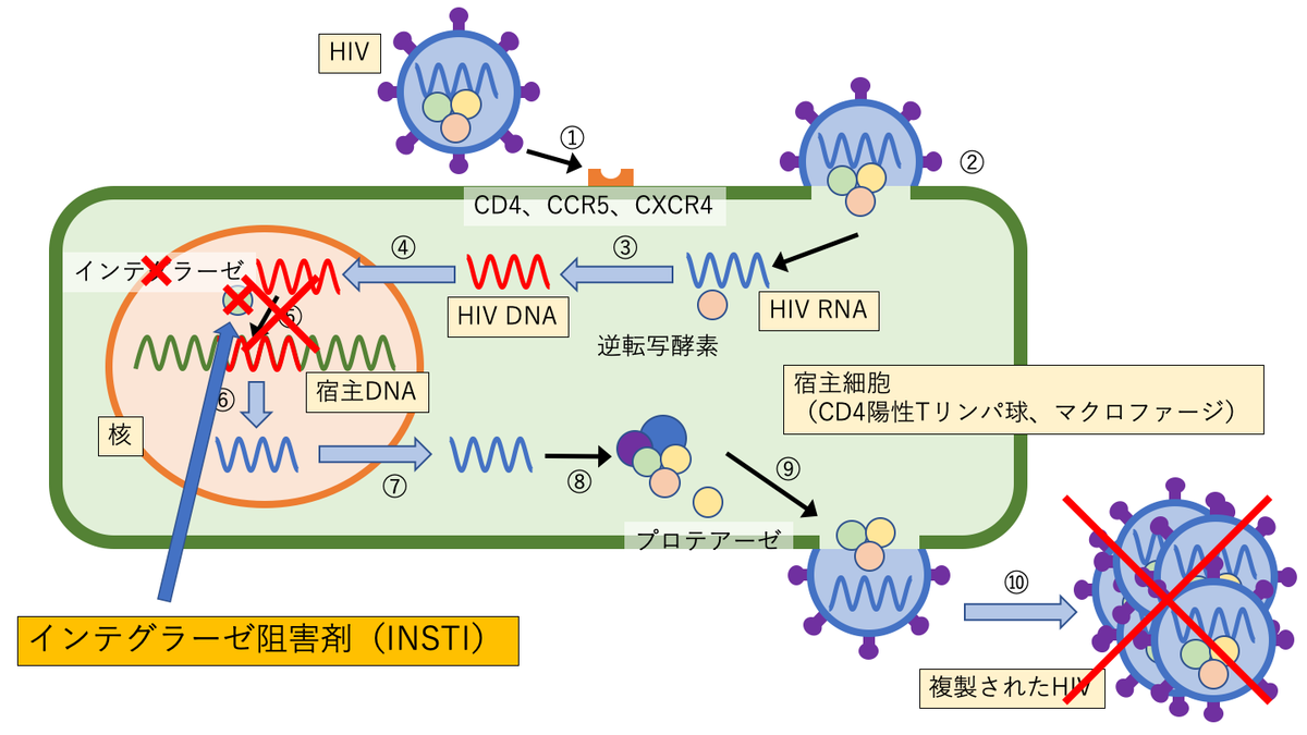 インテグラーゼ阻害剤(INSTI)