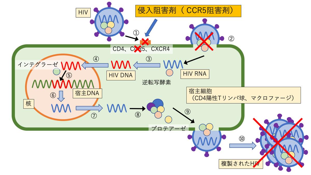 侵入阻害剤(CCR5阻害薬)