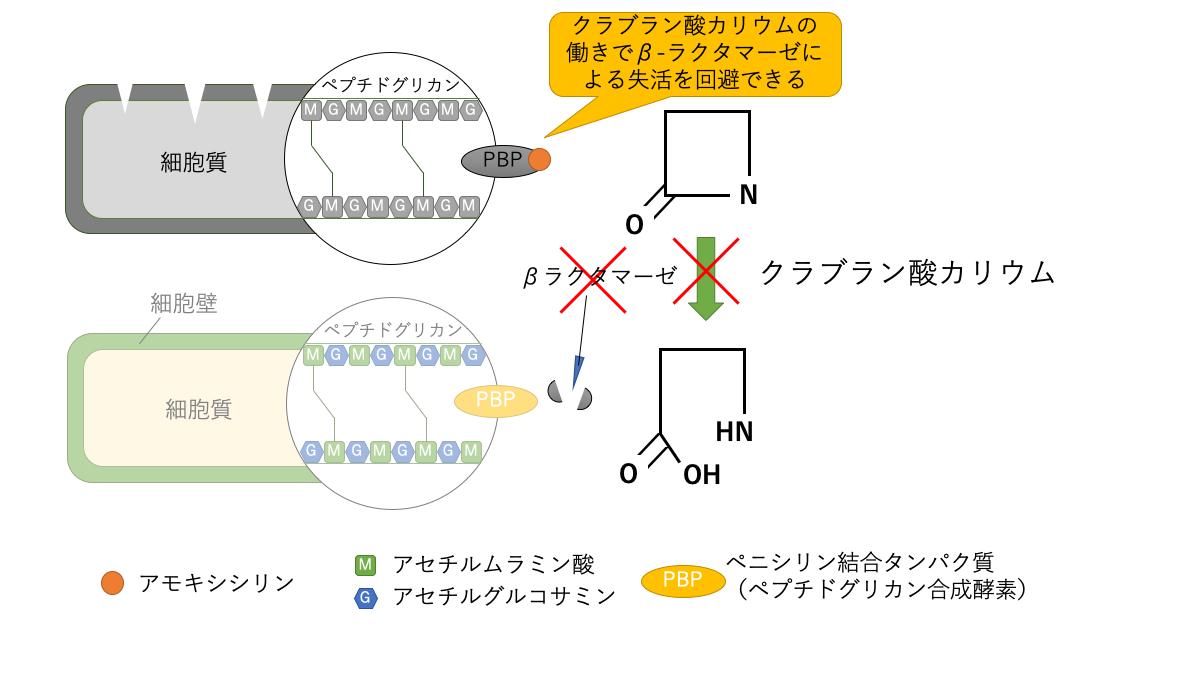 クラブラン酸カリウムの作用機序