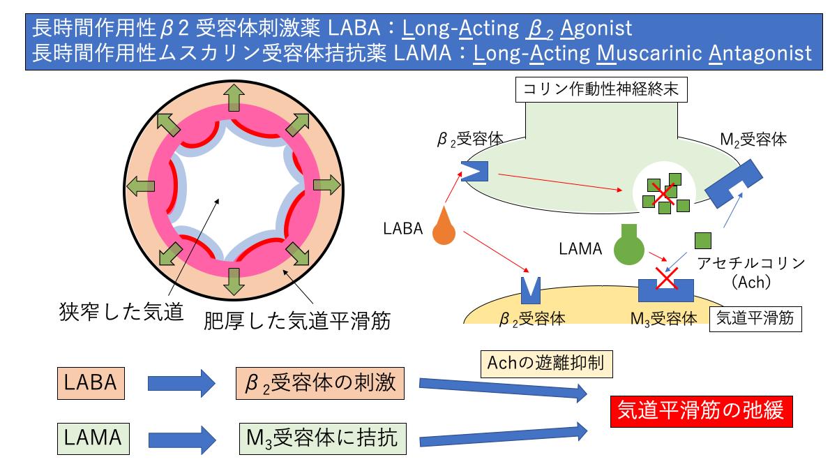 LABAとLAMAの作用機序
