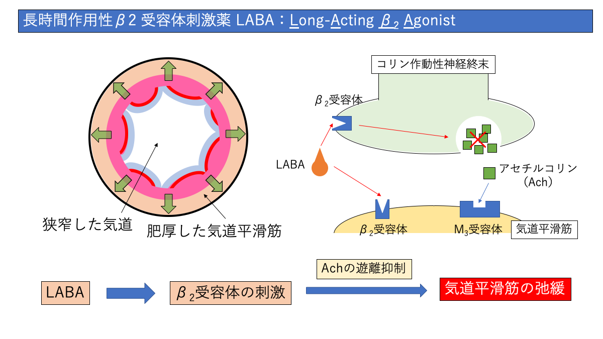 LABAの作用機序