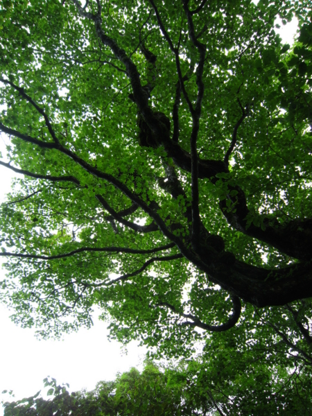 f:id:placeness:20120902110614j:image