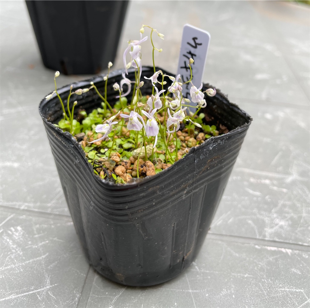 f:id:plant_macky:20201101193642j:image