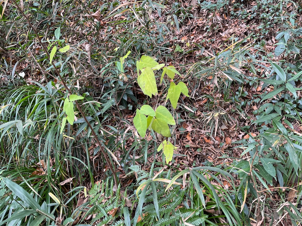 f:id:plant_macky:20201216220517j:image