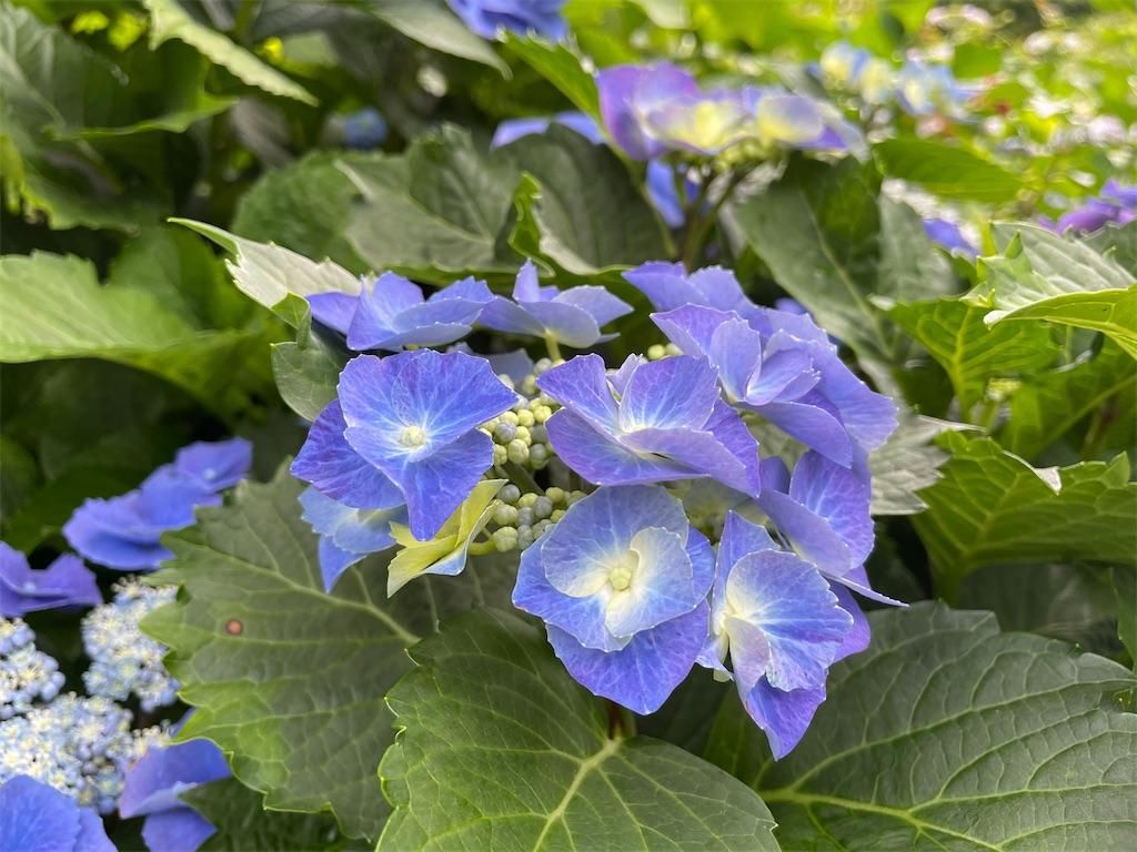 f:id:plant_macky:20210606144251j:image