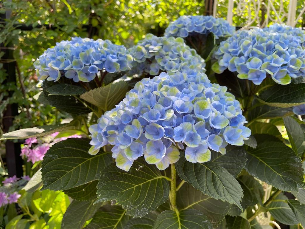 f:id:plant_macky:20210606144341j:image