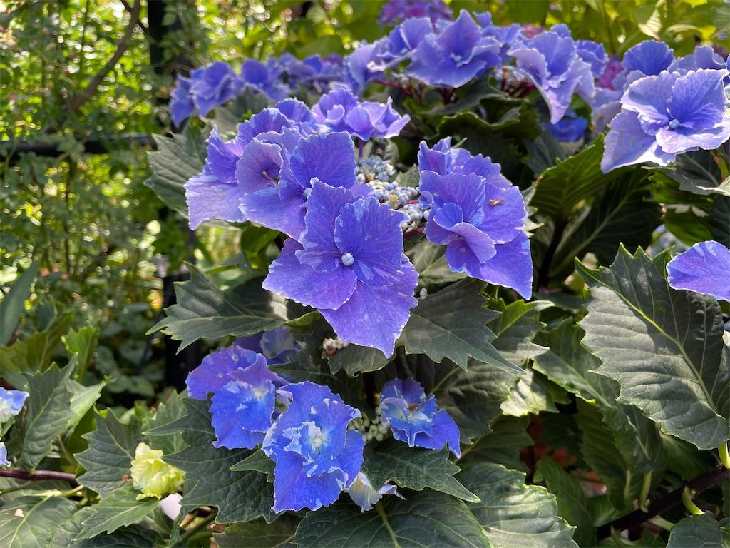 f:id:plant_macky:20210606160518j:image