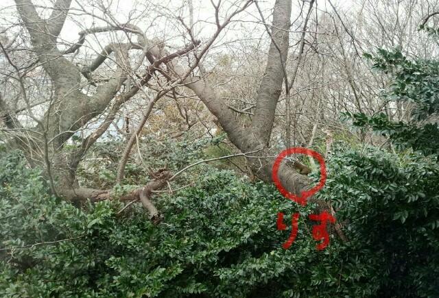 f:id:planterplantan:20161203004044j:image