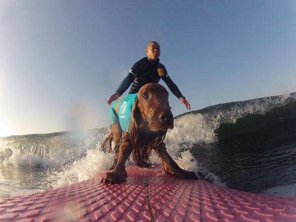 犬とサーフィン