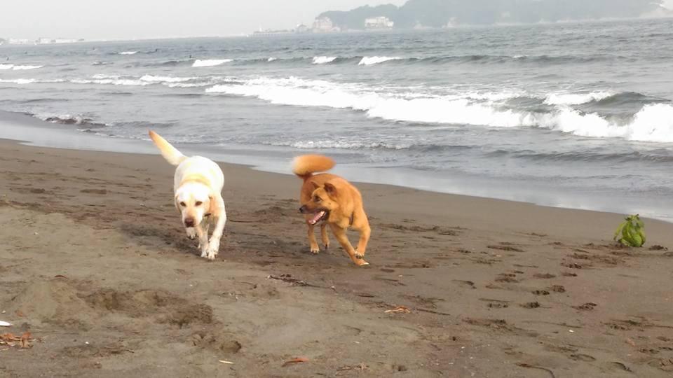 海辺を走る犬_ルーとビビ