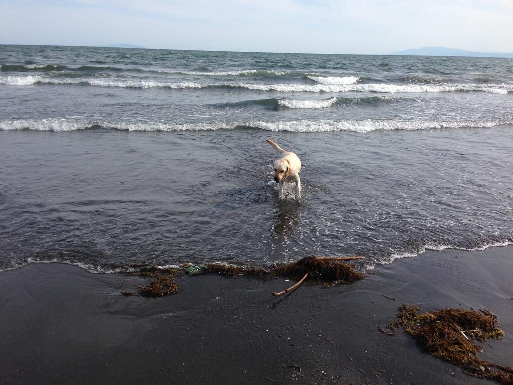 海大好きな犬