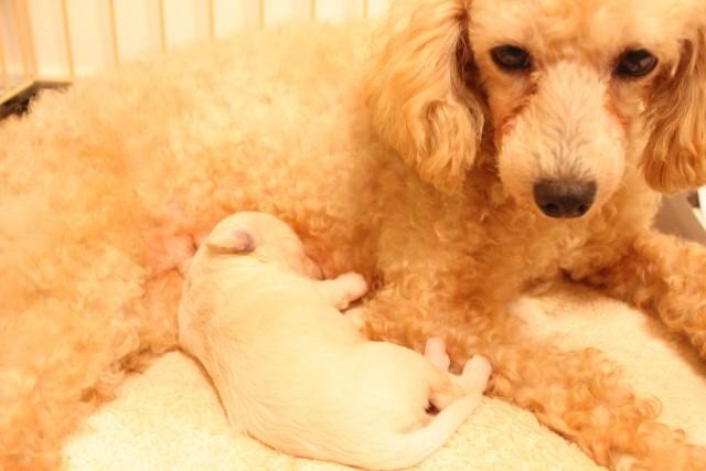 母犬と眠る子犬