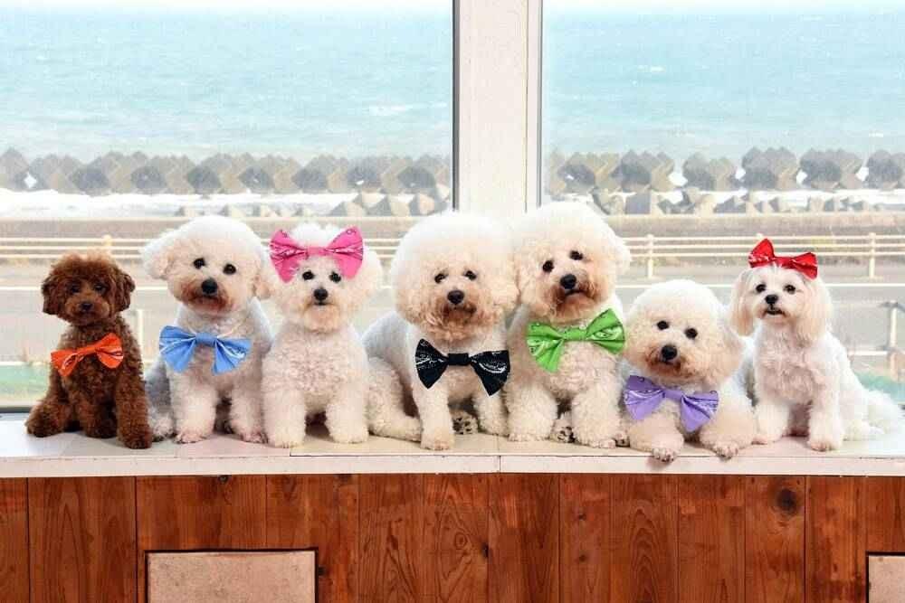 出典:Dogs Garden POCKEThttps://dogs-garden-pocket.com/
