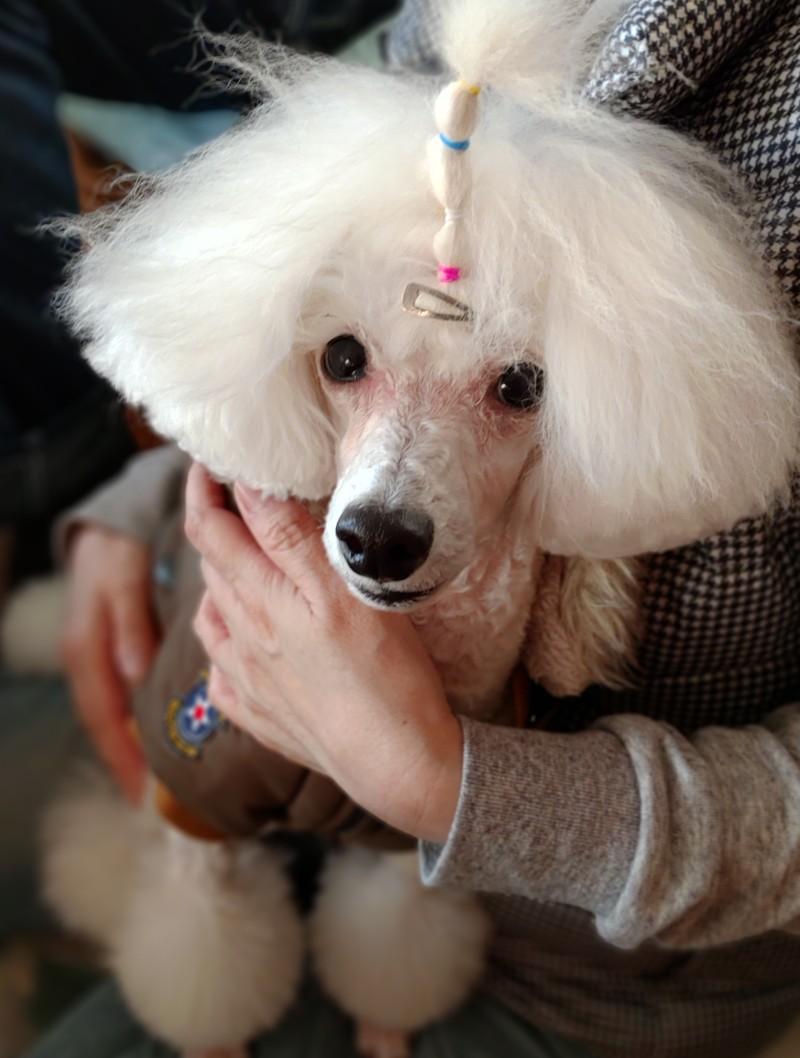 美人なお姉さんに抱っこされてゴキケンな愛犬