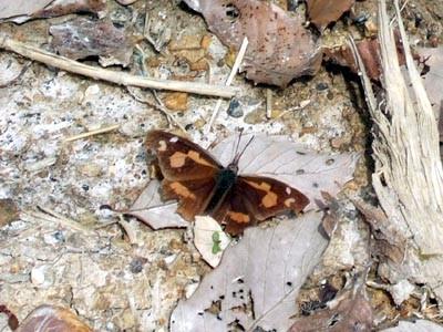 f:id:platycerus:20060401110451j:image