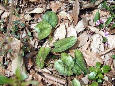 f:id:platycerus:20060401233144j:image