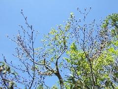 f:id:platycerus:20060409192032j:image