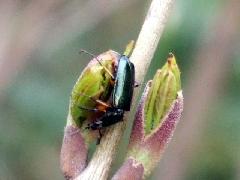 f:id:platycerus:20060409193026j:image