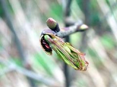 f:id:platycerus:20060409193041j:image