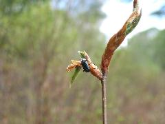 f:id:platycerus:20060409202010j:image