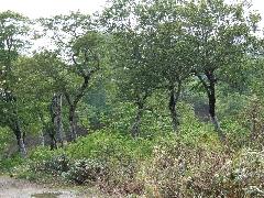 f:id:platycerus:20060409202909j:image