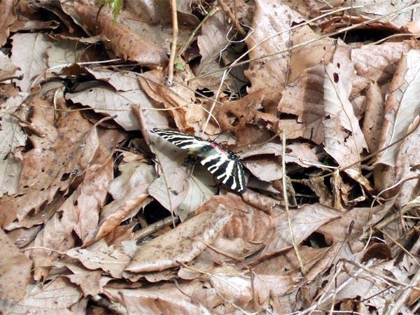 f:id:platycerus:20060414180913j:image