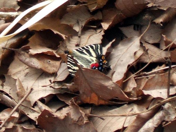 f:id:platycerus:20060414181126j:image