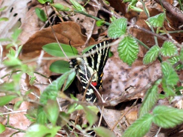f:id:platycerus:20060414182443j:image