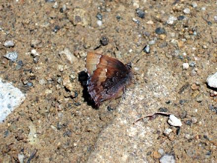 f:id:platycerus:20060428200742j:image