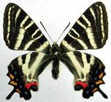f:id:platycerus:20060918194222j:image