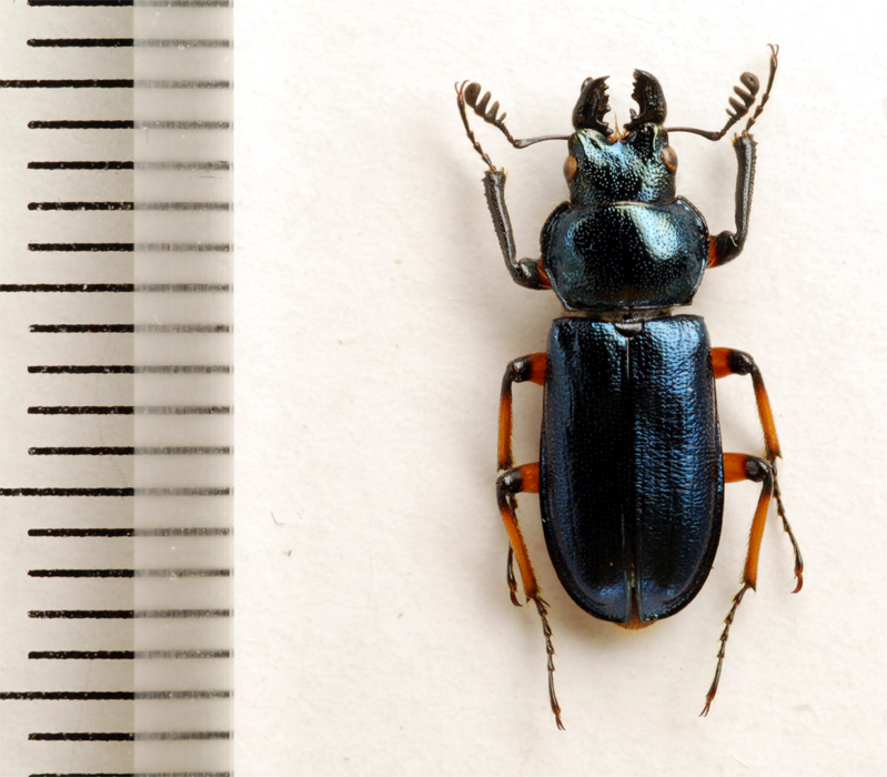 f:id:platycerus:20061002230911j:image:h350