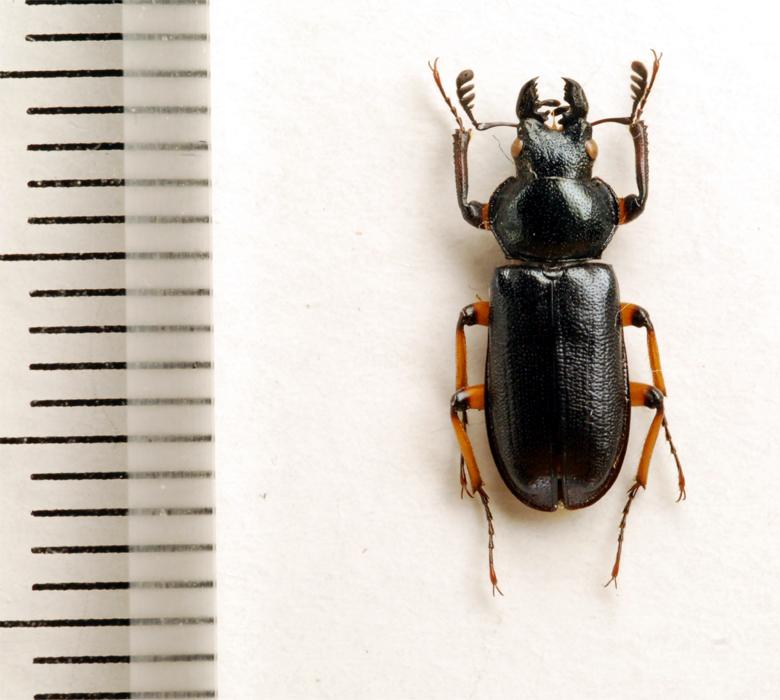 f:id:platycerus:20061002231147j:image:h350