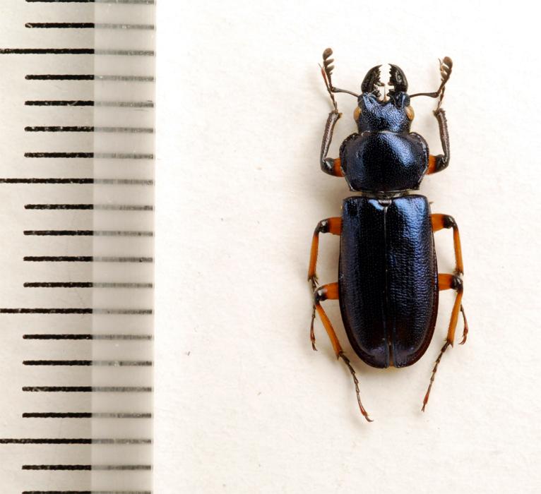f:id:platycerus:20061002231454j:image:h350