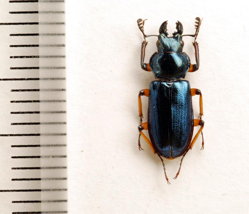 f:id:platycerus:20061002231656j:image:h350
