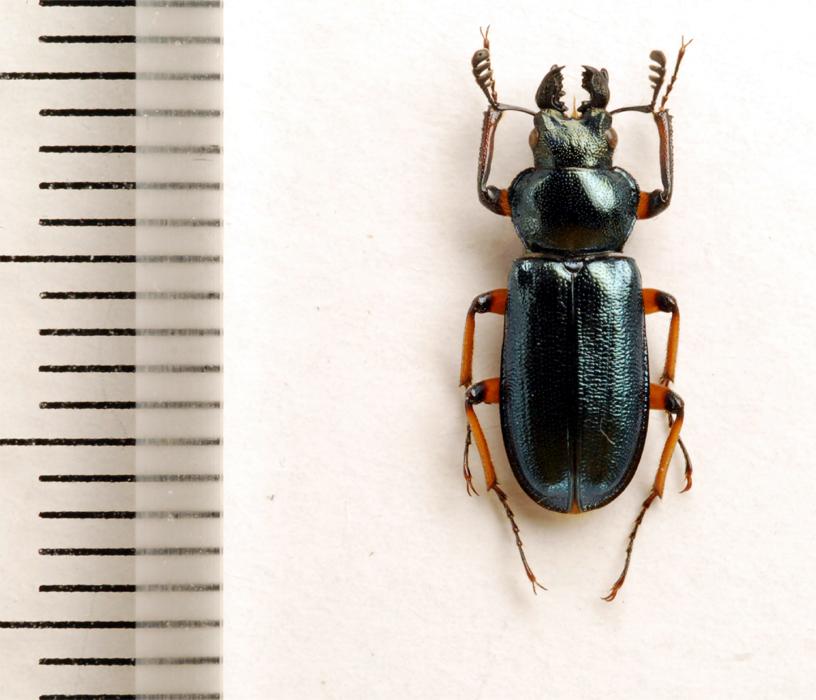 f:id:platycerus:20061002231901j:image:h350
