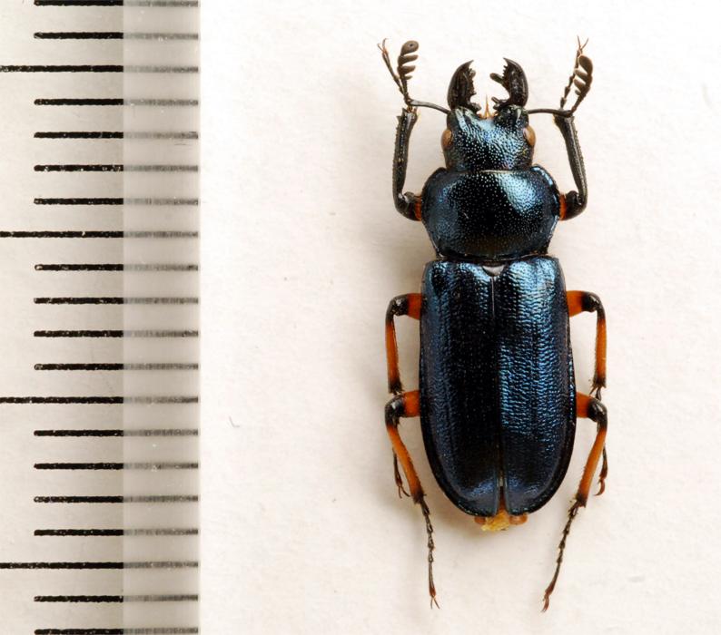 f:id:platycerus:20061002232225j:image:h350