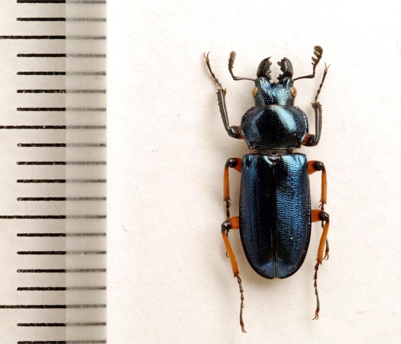 f:id:platycerus:20061002232425j:image:h350