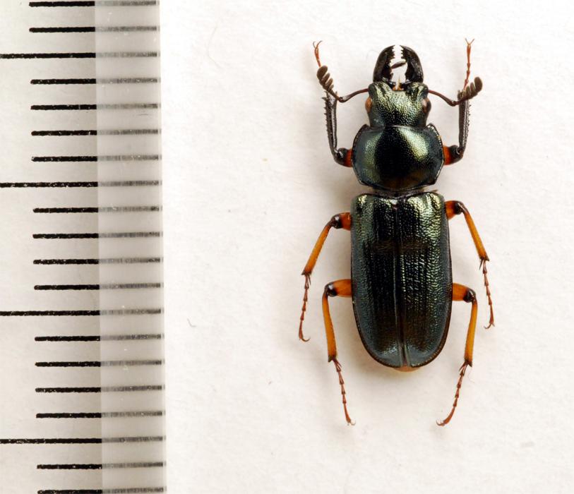 f:id:platycerus:20061002233524j:image:h350